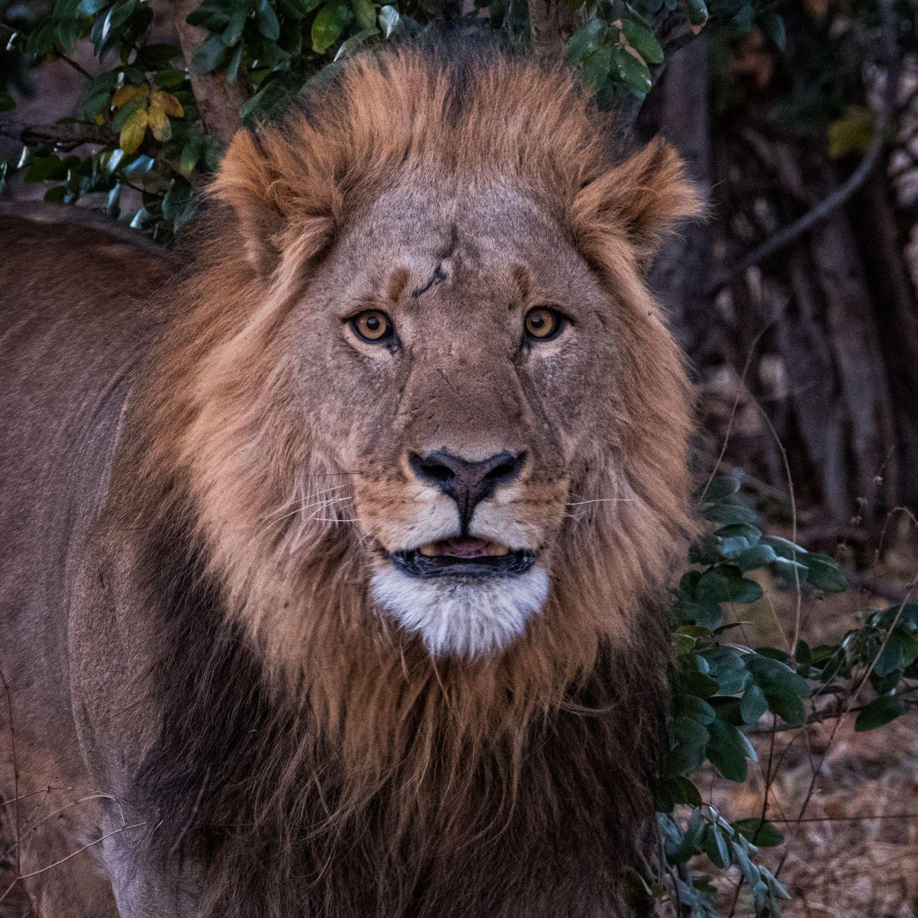 BOTSWANA:  Wildlife in the Landscape—Okavango Delta, Savute Marsh & Chobe River