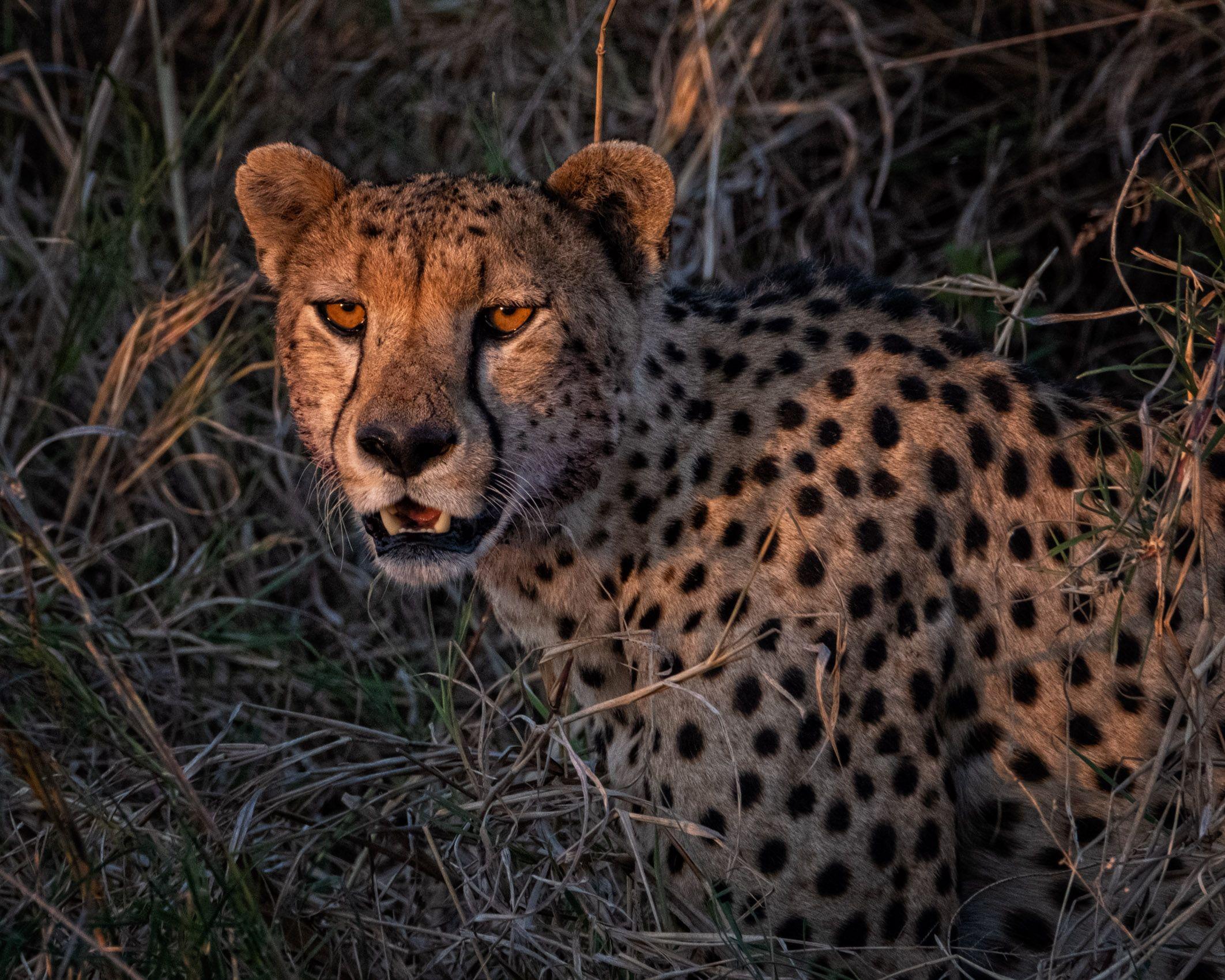 TANZANIA:  Wildlife in the Landscape—Serengeti