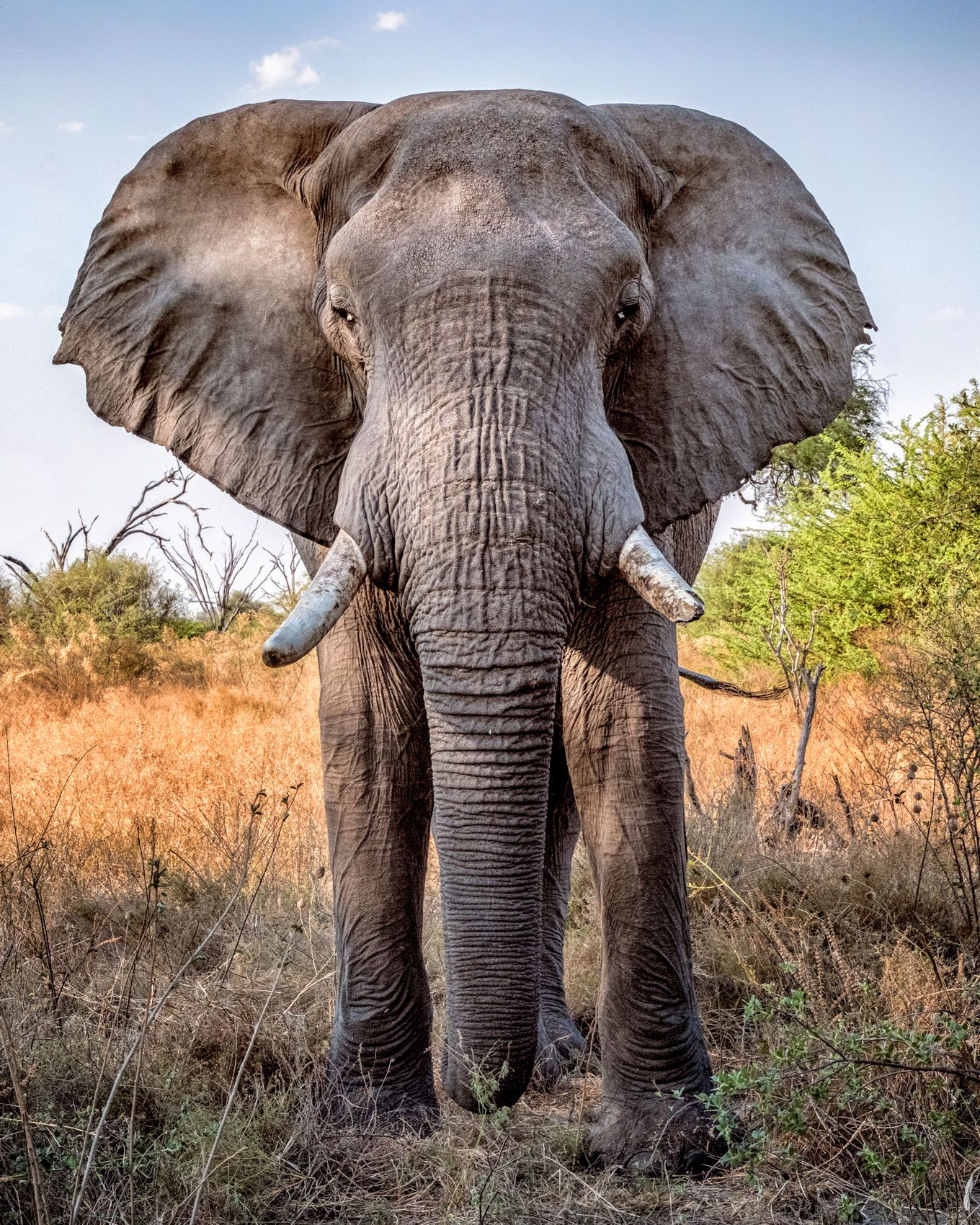 NAMIBIA & BOTSWANA:  The African Elephant, A Celebration