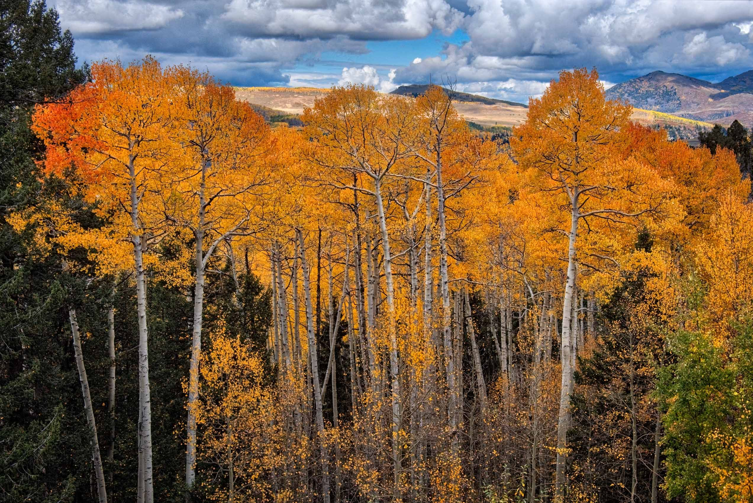 Fall Color in the San Juan Mountains of Colorado
