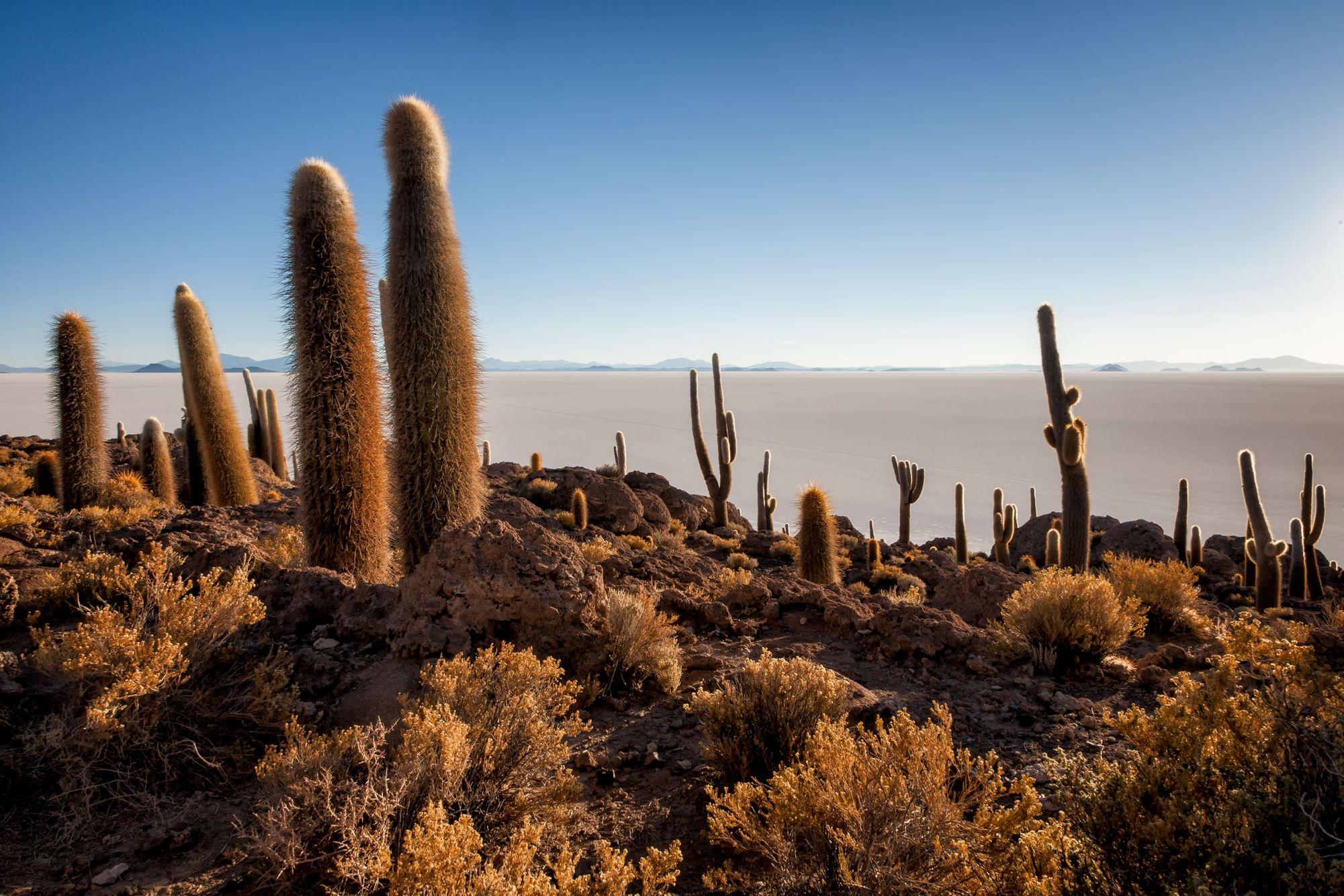 BOLIVIA & CHILE:  El Altiplano