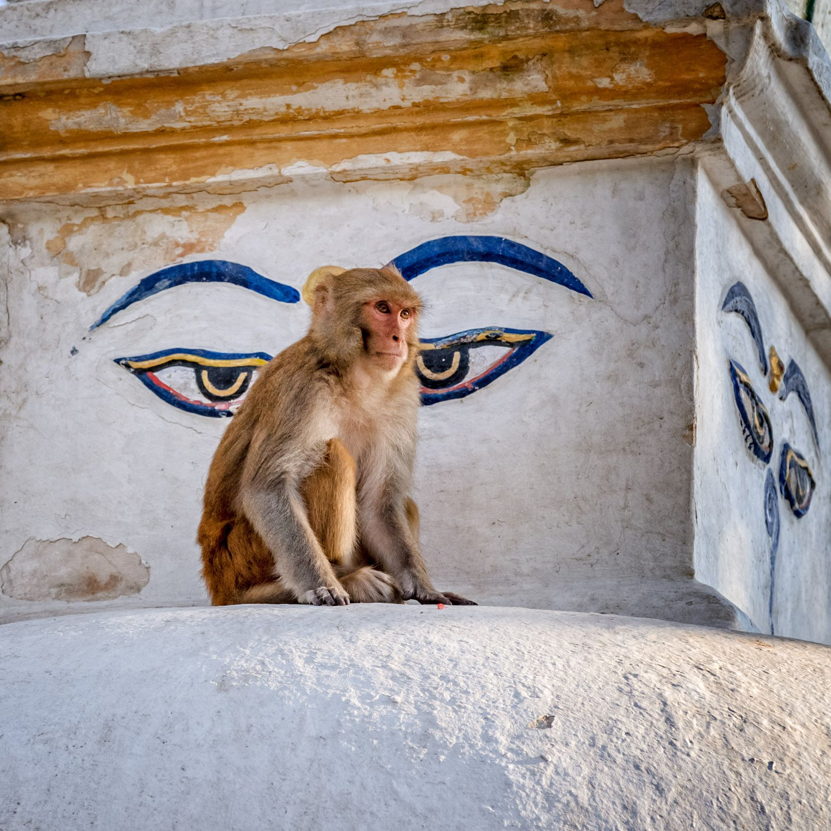 montrose.stupas-1.jpg