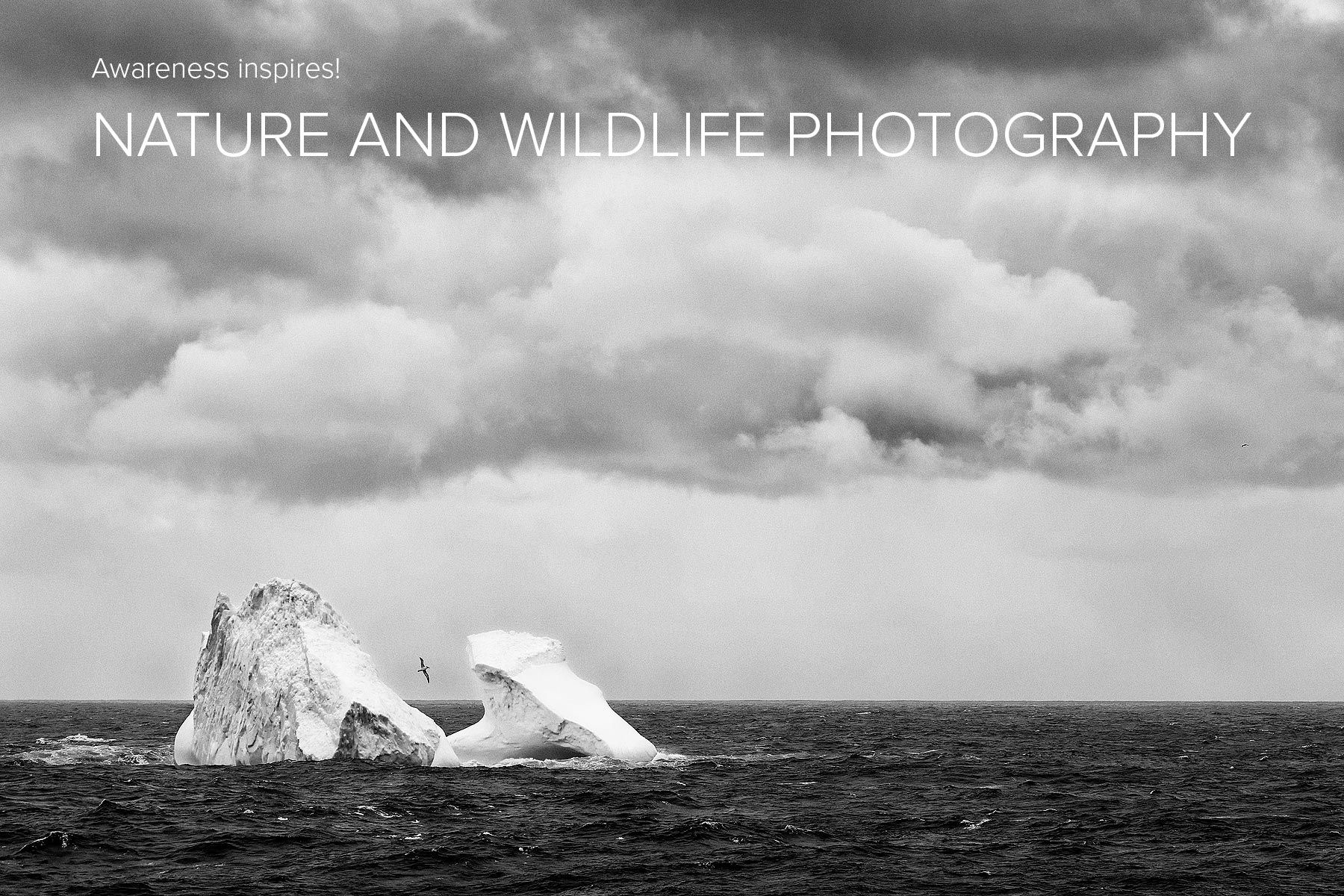 Iceberg-with-Grey-headed-albatross-flying-2_B&W_S6A1005-Bird-Island,-South-Georgia-Islands,-Southern-ocean.jpg