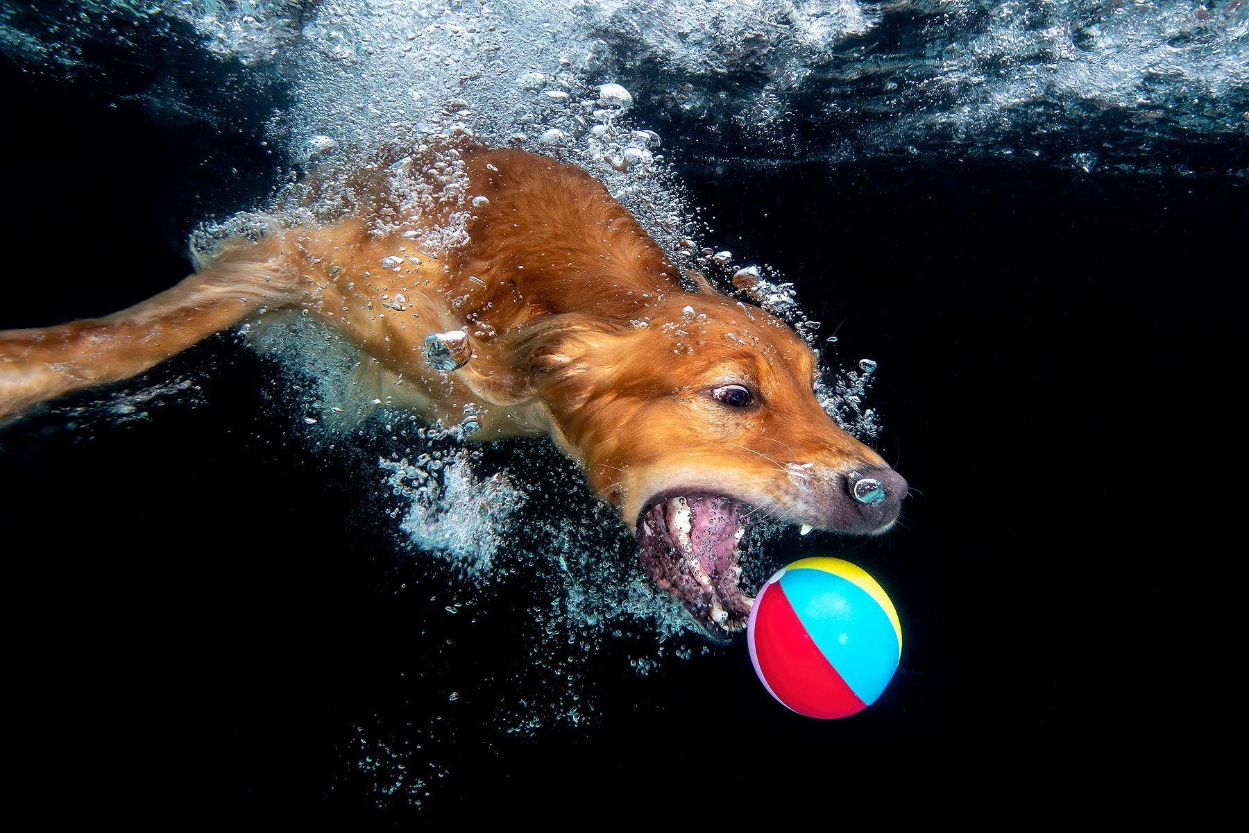Zevon-with-beach-ball-underwater_83A9233-Dover,-FL,-USA.jpg