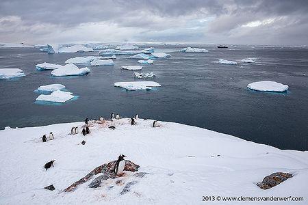 Gentoo-penguins-overlooking-icebergs_S6A0297-Cuverville-Island-Antarctica.jpg