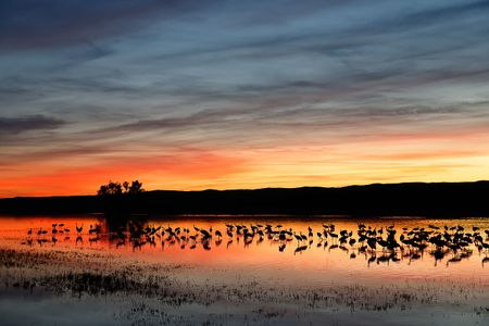 sunset-over-the-crane-pool-1_s6a8777-bosque-del-apache-nwr-san-antonio-nm-usa.jpg