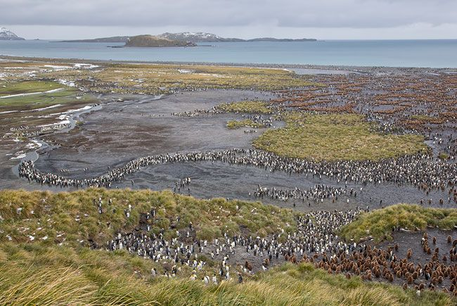 King-Penguin-colony-with-S-curve-river_E7T2471-Salisbury-Plain-South-Georgia-Islands.jpg