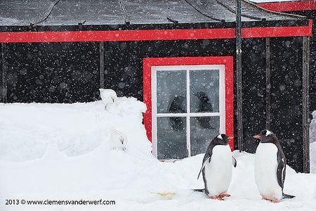 Gentoo-penguin-reflection-in-window_E7T7914-Port-Lockroy-Antarctica.jpg