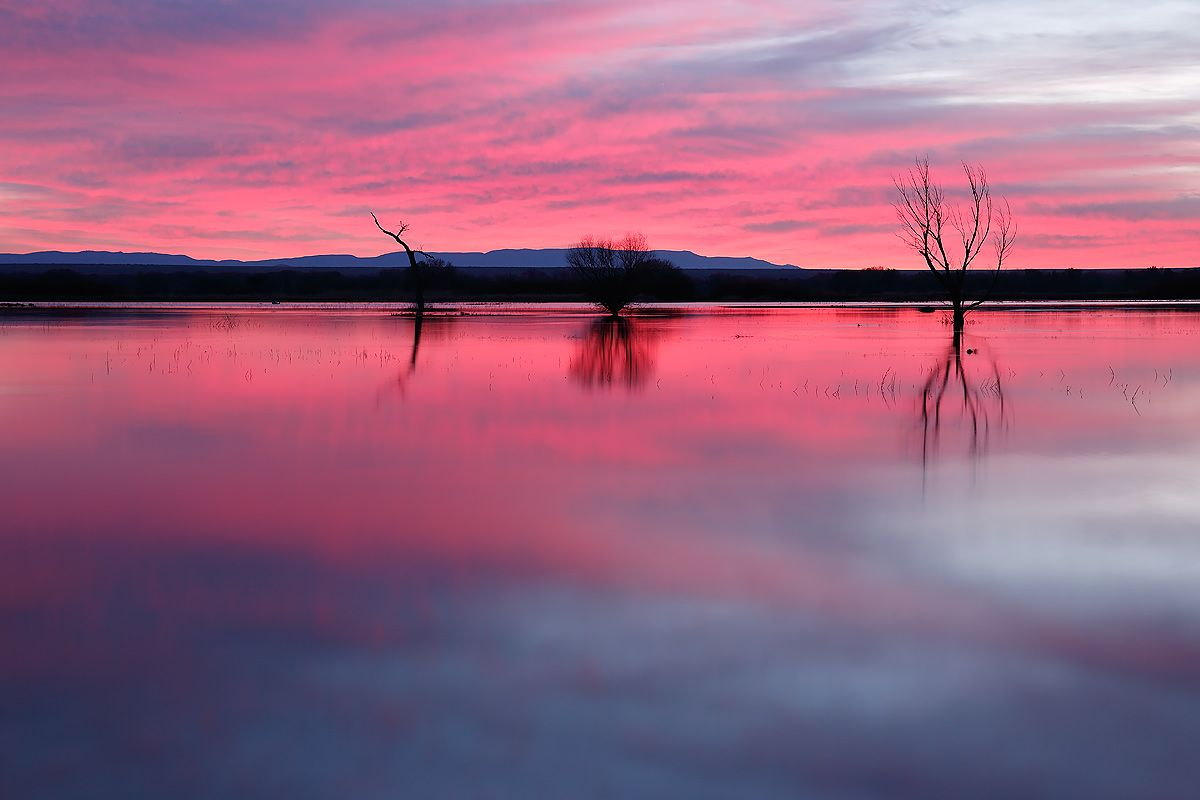 pink-sunrise-on-main-pond-1_s6a8497-bosque-del-apache-nwr-san-antonio-nm-usa.jpg