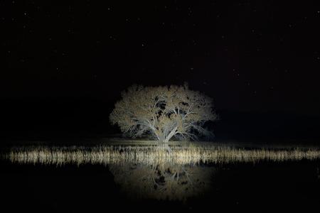 Cottonwood-tree-with-stars_S6A8641-Bosque-del-Apache-NWR,-San-Antonio,-NM,-USA.JPG