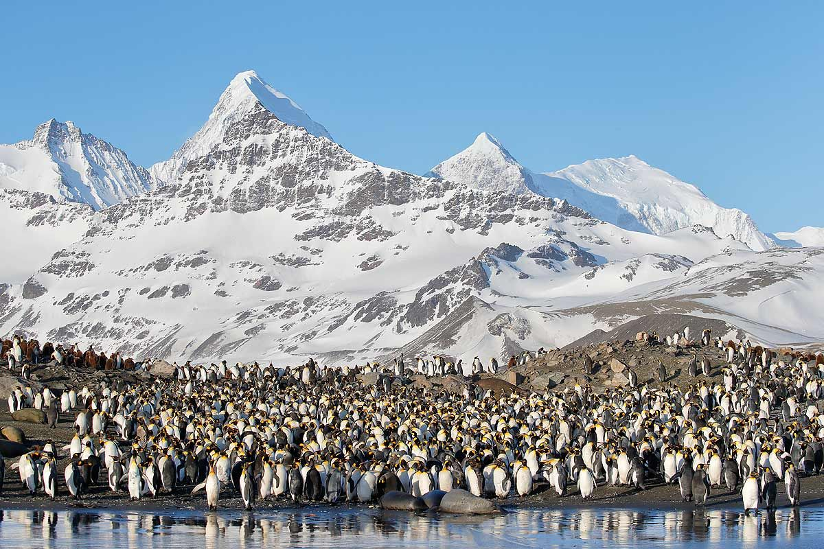king-penguins-lined-up-at-beach_e7t2191-st-andrews-bay-entrance-south-georgia-islands-southern-ocean.jpg