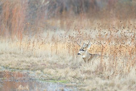 mule-deer-hiding-near-water-1_e7t4332-bosque-del-apache-nwr-san-antonio-nm-usa.jpg