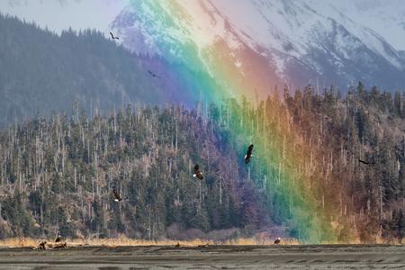 Bald eagles and rainbow_44A7075-Kachemak Bay, Homer, Alaska, USA.jpg