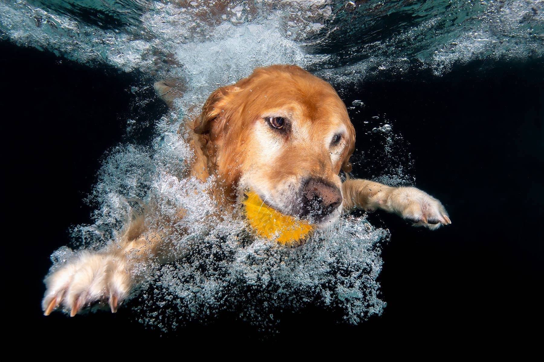 Ozzy-swimming-underwater-with-ball_83A7762-Dover,-FL,-USA.jpg