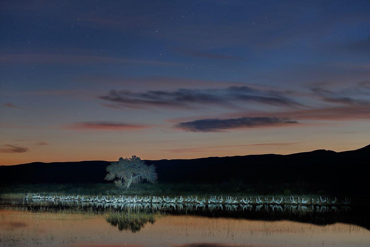sandhill-cranes-and-stars-light-painting-1_e7t4192-bosque-del-apache-nwr-san-antonio-nm-usa.jpg