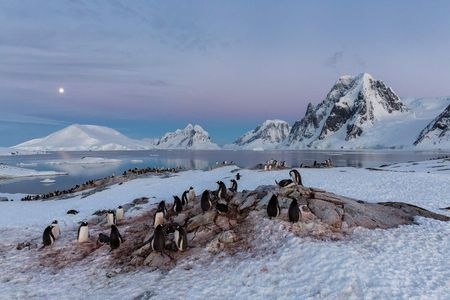 Gentoo-penguins-resting-for-the-night_S6A0096-Petermann-Island,-Antarctica.JPG