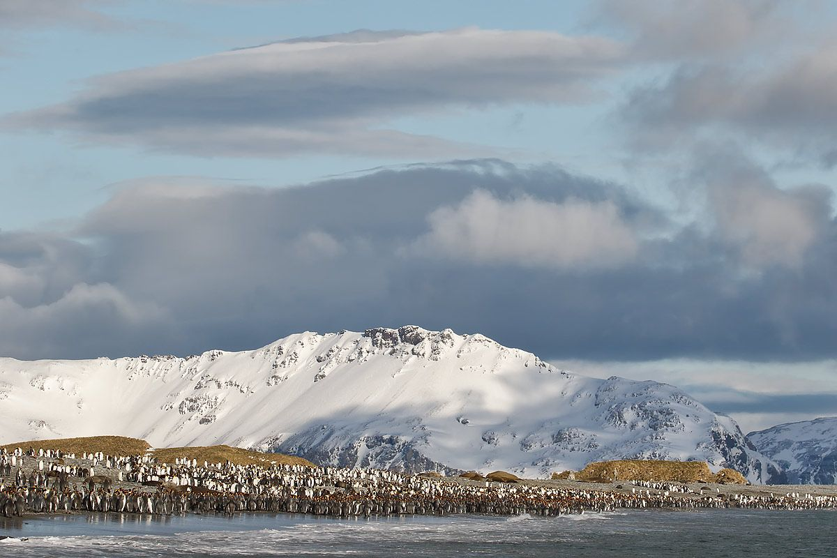king-penguins-and-clouds_44a8177-salisbury-plain-bay-of-isles-south-georgia-islands-southern-ocean.jpg