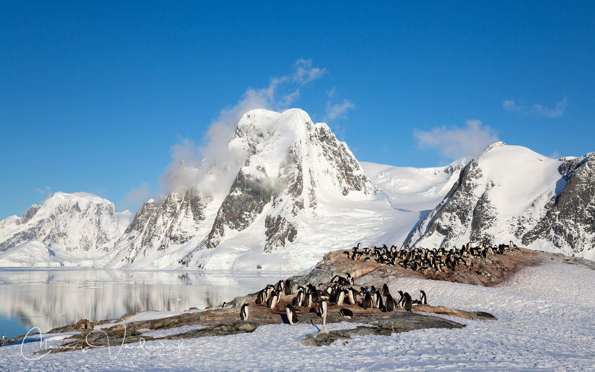 gentoo-penguin-colony_s6a9892-petermann-island-antarctica.jpg