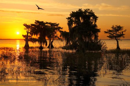 Sunrise at Lake Blue Cypress_S6A6960-Lake Blue Cypress, FL, USA.jpg