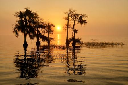 Sunrise in the mist_S6A0053-Lake Blue Cypress, FL, USA.jpg