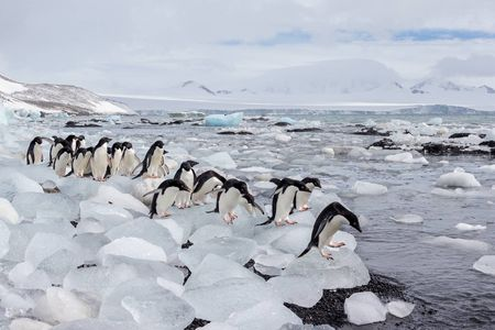 Adelie-penguins-lined-up-on-ice-blocks_E7T8159-Brown-Bluff,-Antarctica.JPG