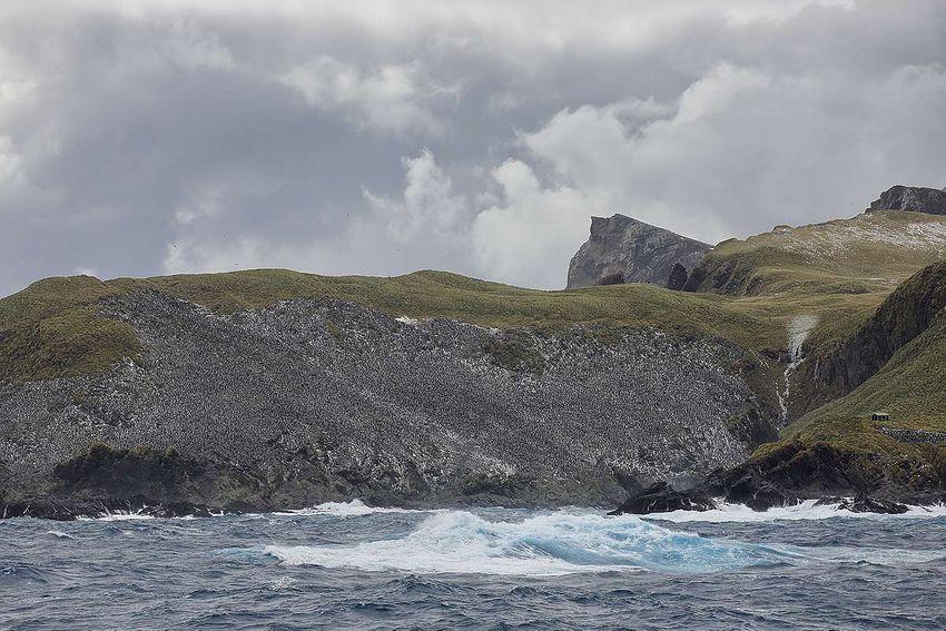 penguin-colony-at-bird-island_s6a0915-bird-island-south-georgia-islands-southern-ocean.jpg