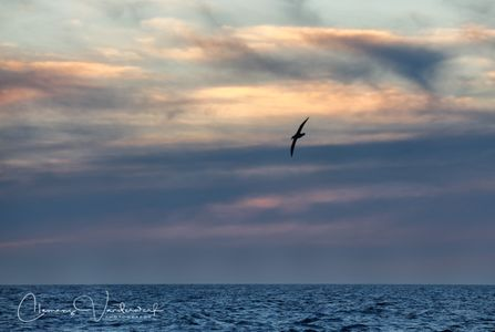 dusk-at-the-scotia-sea_83a3518-scotia-sea-southern-ocean.jpg