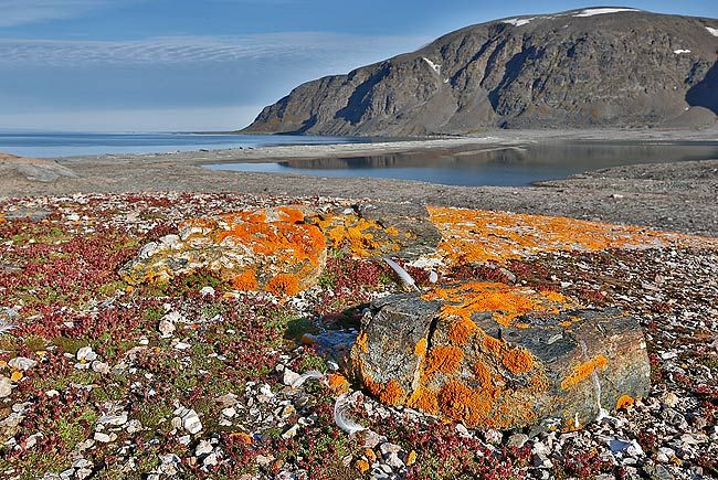 Rocks-with-orange-lichen-in-landscape_S6A2802-Svensk-Neset-Svalbard-Arctic.jpg