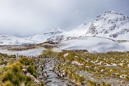 King-Penguins-along-small-river-and-mountains-Tone-Mapped_B8R2930-Salisbury-Plain-South-Georgia-Islands_HDR.jpg