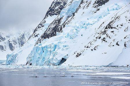 Pot-of-orcas-entering-the-Lemaire_E7T6618-Lemaire-Channel-Gerlache-Strait-Antarctica.jpg
