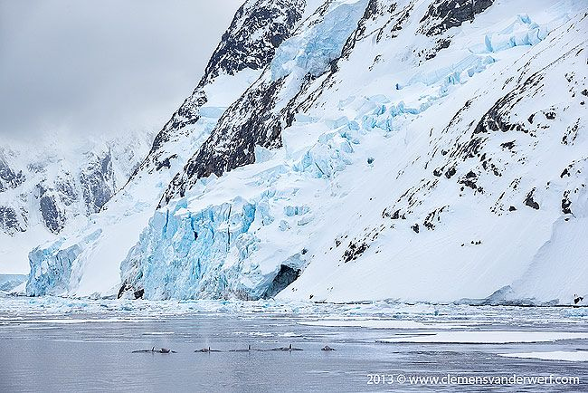 Pot-of-orcas-entering-the-Lemaire_E7T6618-Lemaire-Channel-Gerlache-Strait-Antarctica.jpg