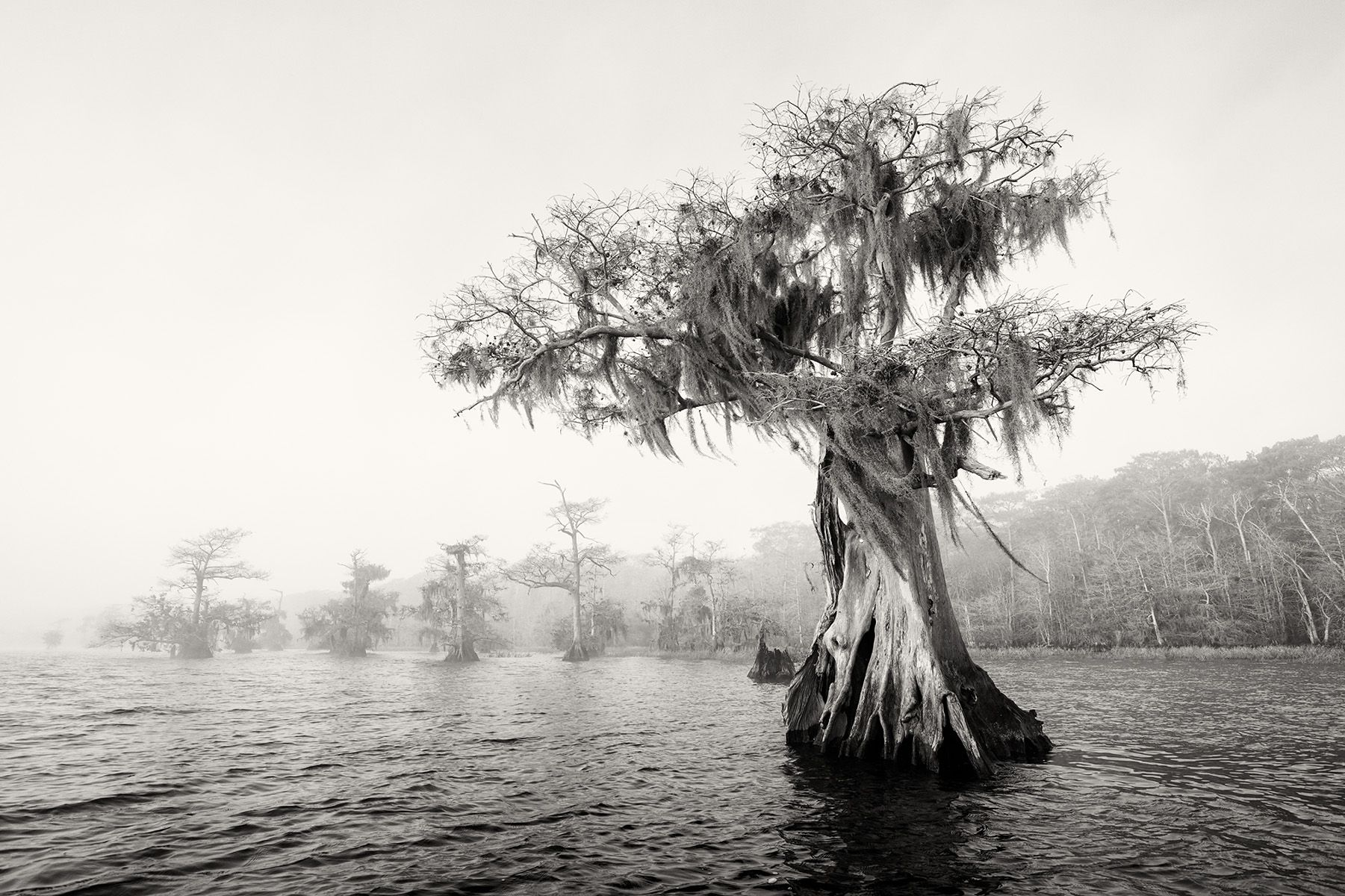 Cypress tree in the lake_B&W_S6A0160-Lake Blue Cypress, FL, USA.jpg