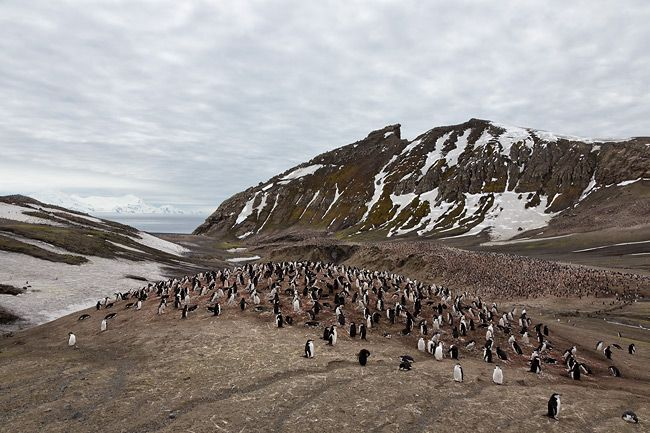 Chinstrap-Penguin-colony-overlook-at-Bailey-Head_S6A9608-Bailey-Head-Deception-Island-Antarctica.jpg