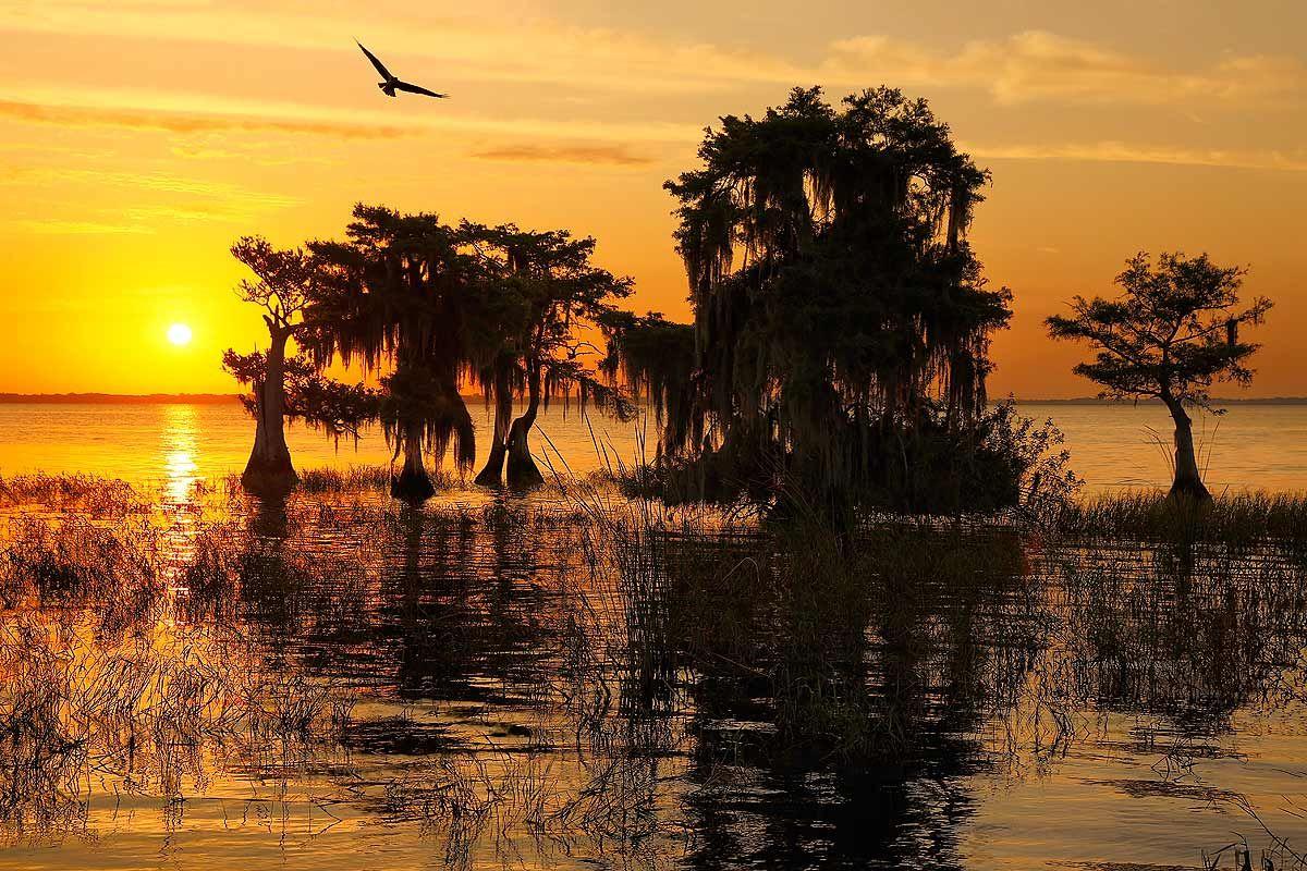 sunrise-at-lake-blue-cypress_s6a6960-lake-blue-cypress-fl-usa.jpg