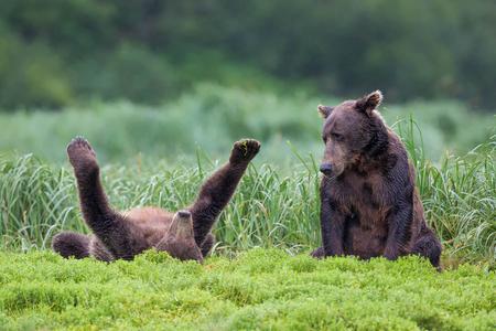 Coastal-brown-bear-cub-playing-on-its-back_B8R1942-Geographic-Harbour,-Katmai-NP,-Alaska.JPG