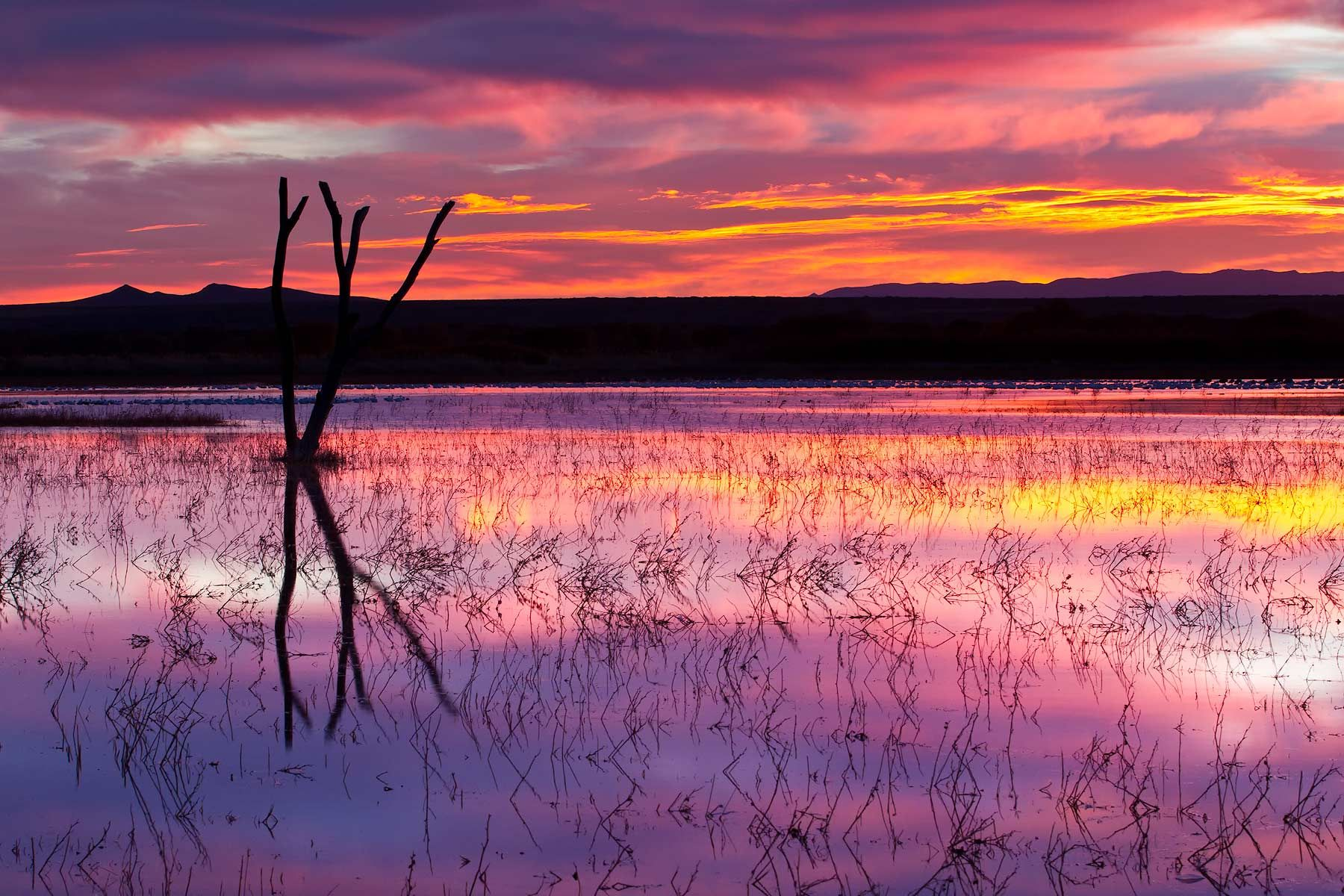 Purple-sunrise-over-the-main-pond-23100018-Bosque-del-Apache-NWR,-San-Antonio,-NM.jpg
