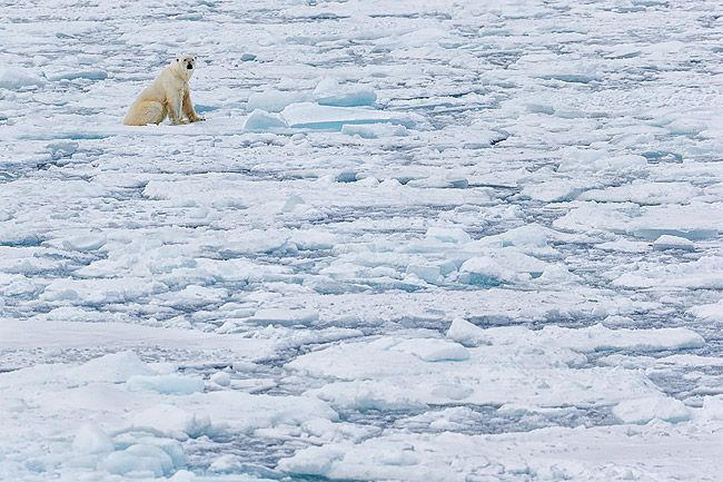 Polar-bear-overlooking-the-sea-ice_E7T4890-Sea-ice-at-82-degree-North-Svalbard-Arctic.jpg
