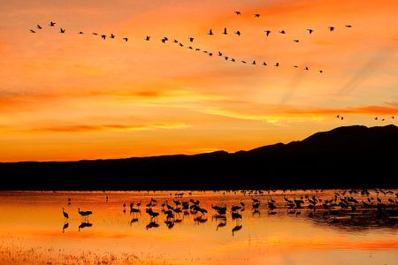 sunset-with-orange-sky-at-the-crane-pool-1_e7t4060-bosque-del-apache-nwr-san-antonio-nm-usa.jpg
