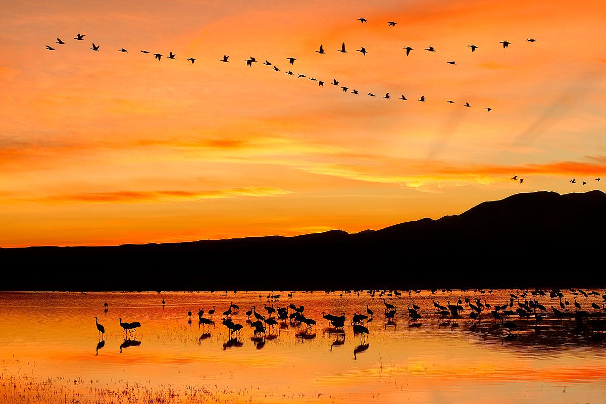 sunset-with-orange-sky-at-the-crane-pool-1_e7t4060-bosque-del-apache-nwr-san-antonio-nm-usa.jpg