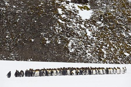 King-Penguins-standing-in-front-of-rock-face_E7T2638-Right-Whale-Bay-South-Georgia-Islands.jpg