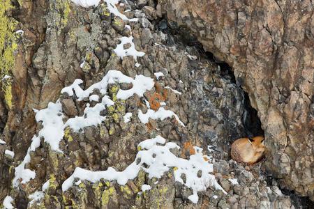 Red-Fox-sleeping_E7T5092-Lamar-Valley,-Yellowstone-National-Park,-WY,-USA.JPG