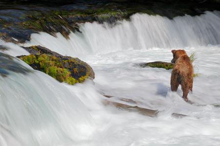 Coastal-brown-bear-in-falls-water-blur_A3I7914-Brooks-Falls,-Katmai-National-Park-&-Preserve,-AK,-USA.JPG