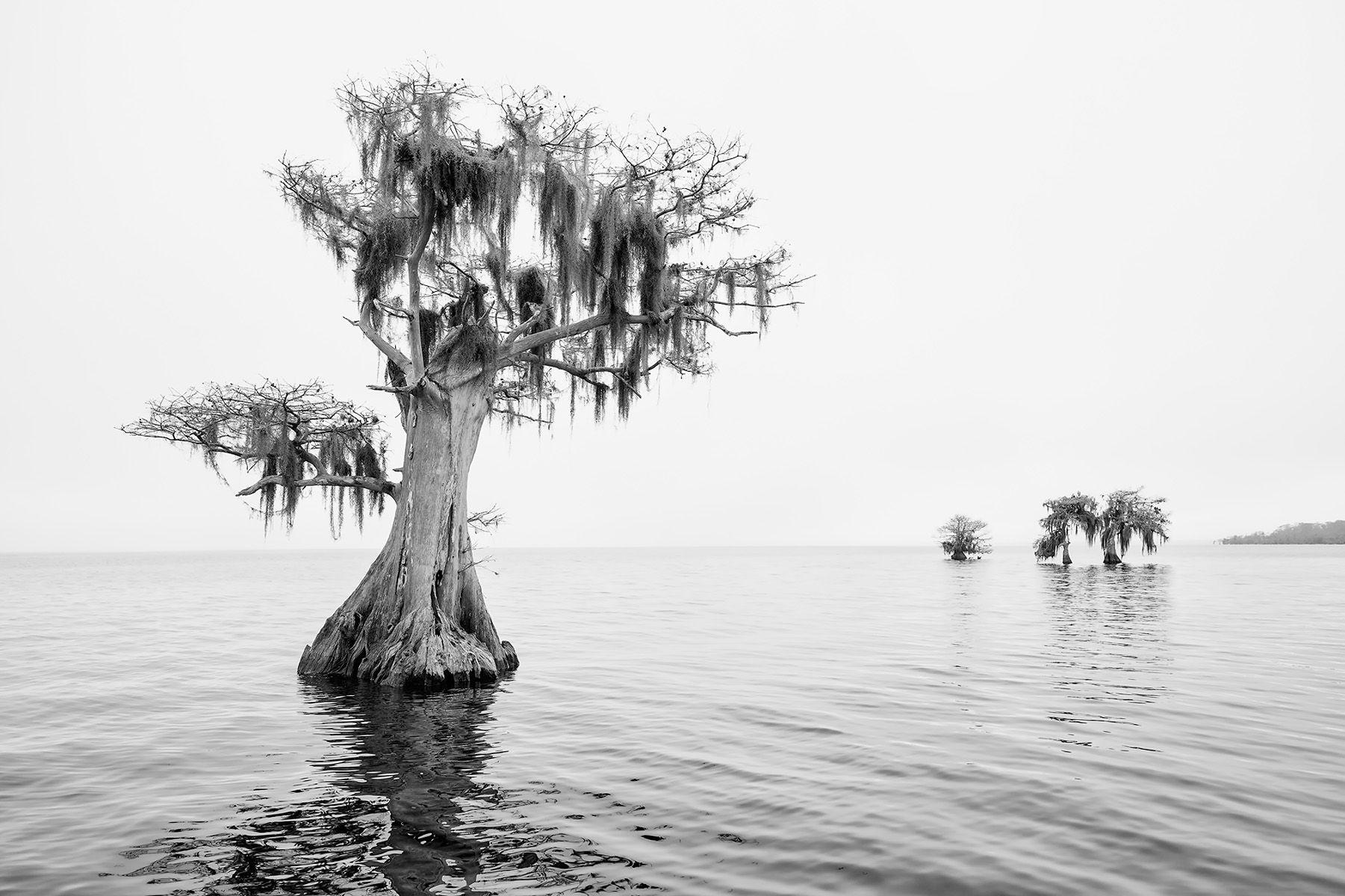 Cypress tree standing alone_B&W_S6A0571-Lake Blue Cypress, FL, USA.jpg