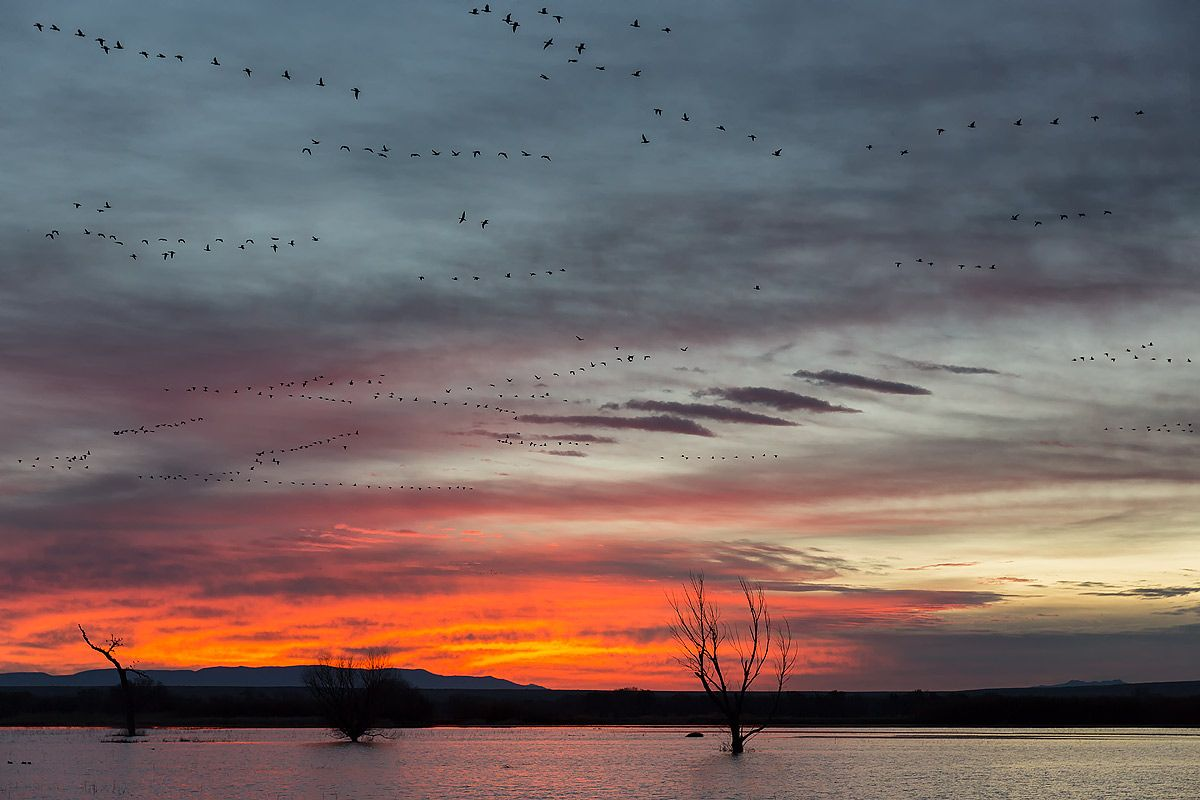 sunrise-with-orange-sky-and-geese-flying-1_s6a8514-bosque-del-apache-nwr-san-antonio-nm-usa.jpg