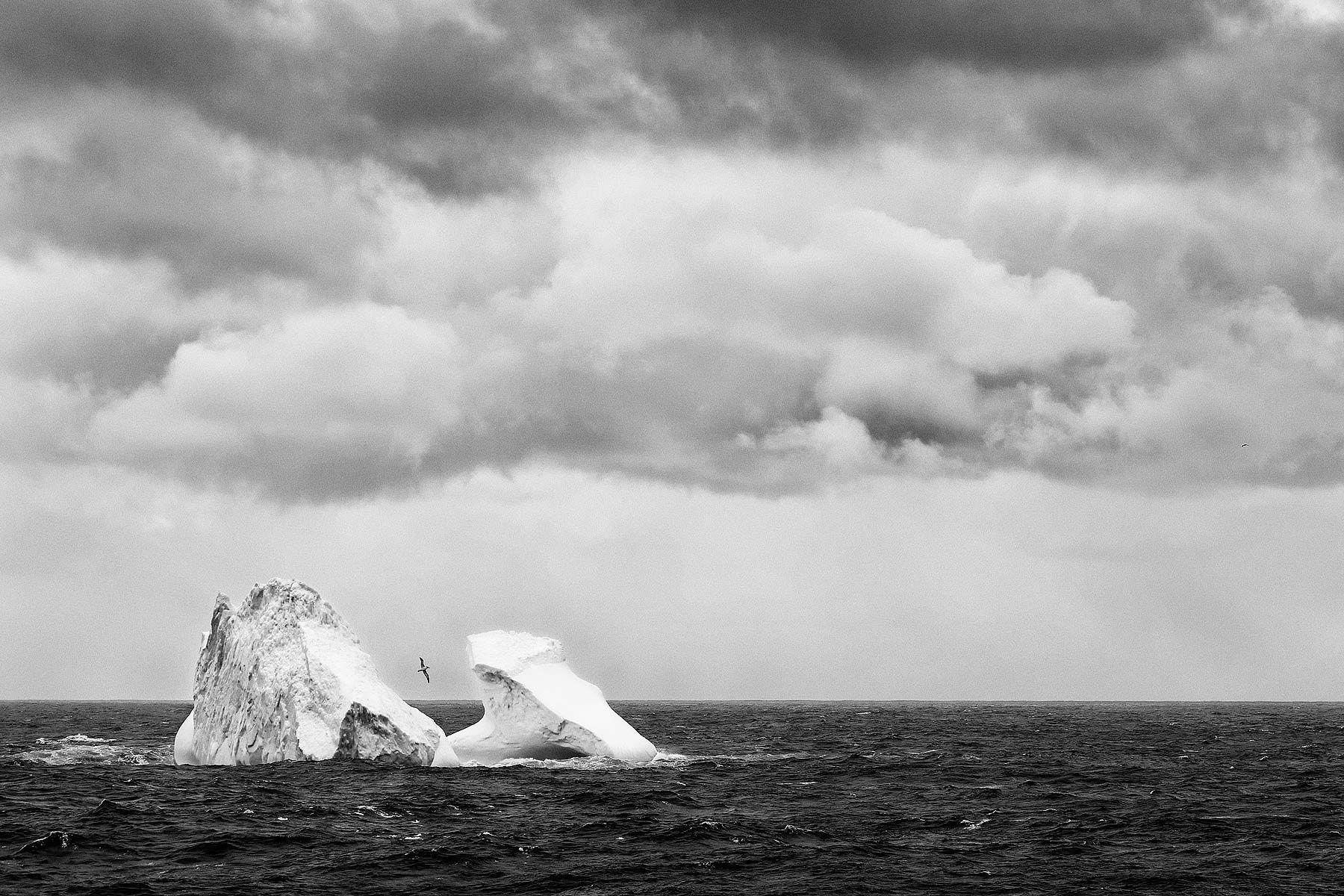 Iceberg-with-Grey-headed-albatross-flying_B&W_S6A1005-Bird-Island,-South-Georgia-Islands,-Southern-ocean.jpg