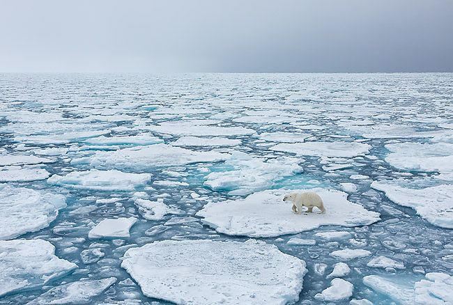 Polar-bear-on-sea-ice-landscape_S6A3266-Sea-ice-at-82-degree-North-Svalbard-Arctic.jpg