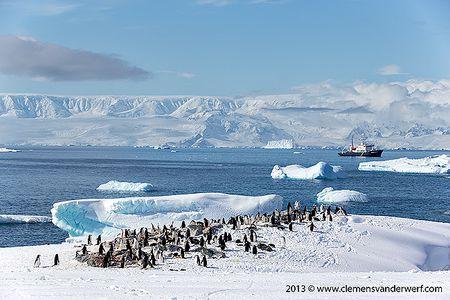 Chinstrap-penguins-in-their-environment_E7T6398-Hydrurga-Rocks-Two-Hummock-Island-Antarctica.jpg