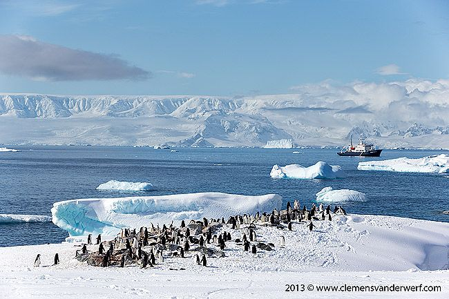 Chinstrap-penguins-in-their-environment_E7T6398-Hydrurga-Rocks-Two-Hummock-Island-Antarctica.jpg