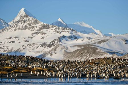 King-penguins-and-seals-on-beach_E7T2027-St-Andrews-Bay-entrance,-South-Georgia-Islands,-Southern-ocean.JPG