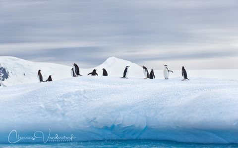gentoo-and-chinstrap-penguins-on-ice-with-blue-water_e7t0339-cierva-cove-antarctica.jpg